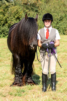 Local horse/pony & Mature RIder